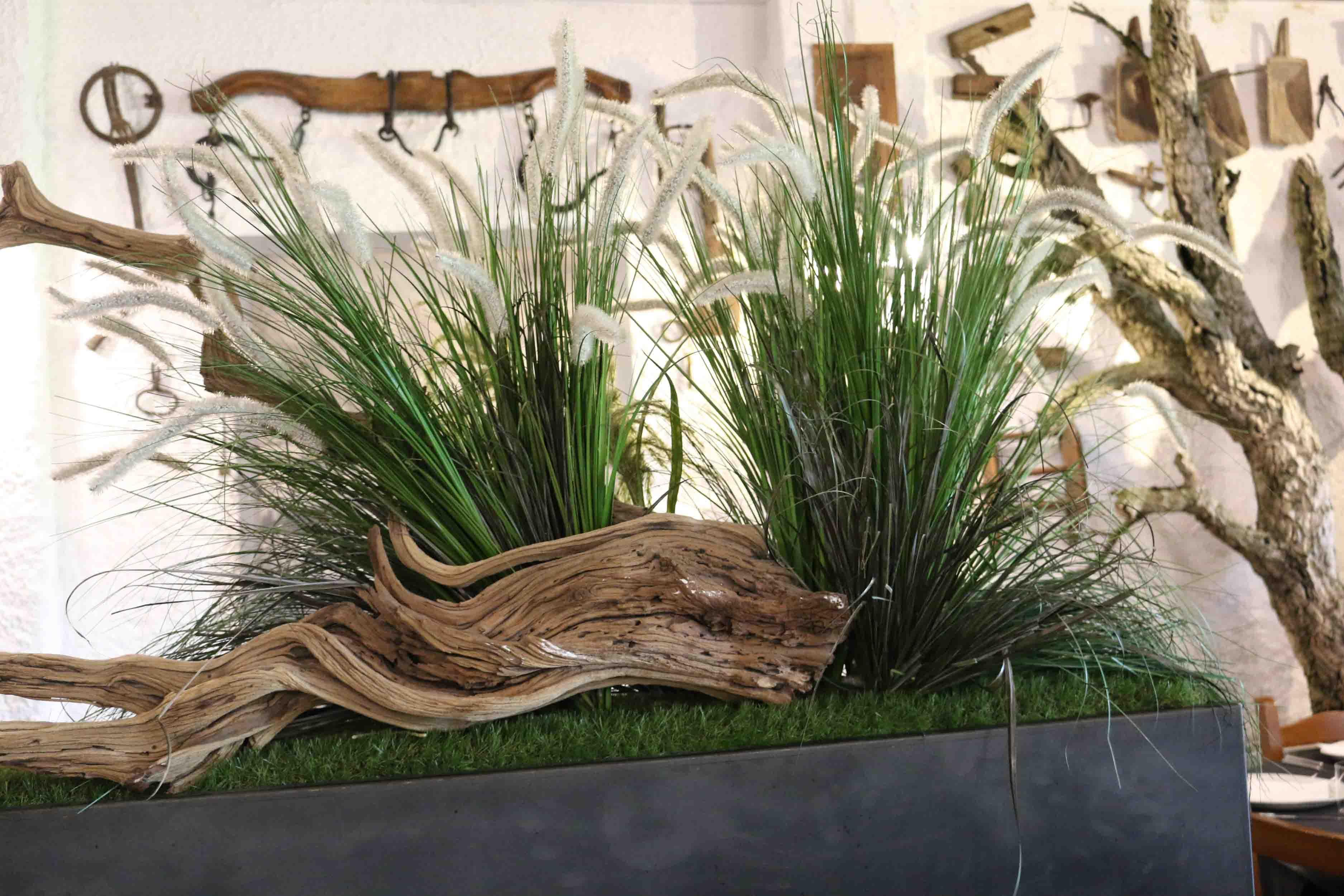 Piante decorative ristorante Vecio Piave